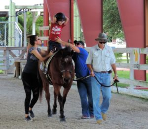 Unmounted horse therapies